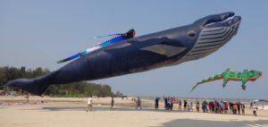 30-meter-blue-whale-in-thailand